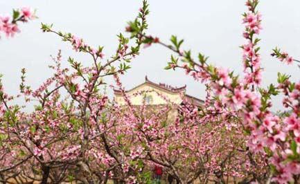 【桃花春色暖先开,明媚谁人不看来】_【唐朝】_【周朴】