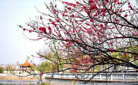 春色满园关不住,一枝红杏出墙来。_【宋朝】_【叶绍翁】