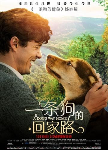 《一条狗的回家路》电影好看吗?一条狗的回家路影评及简介